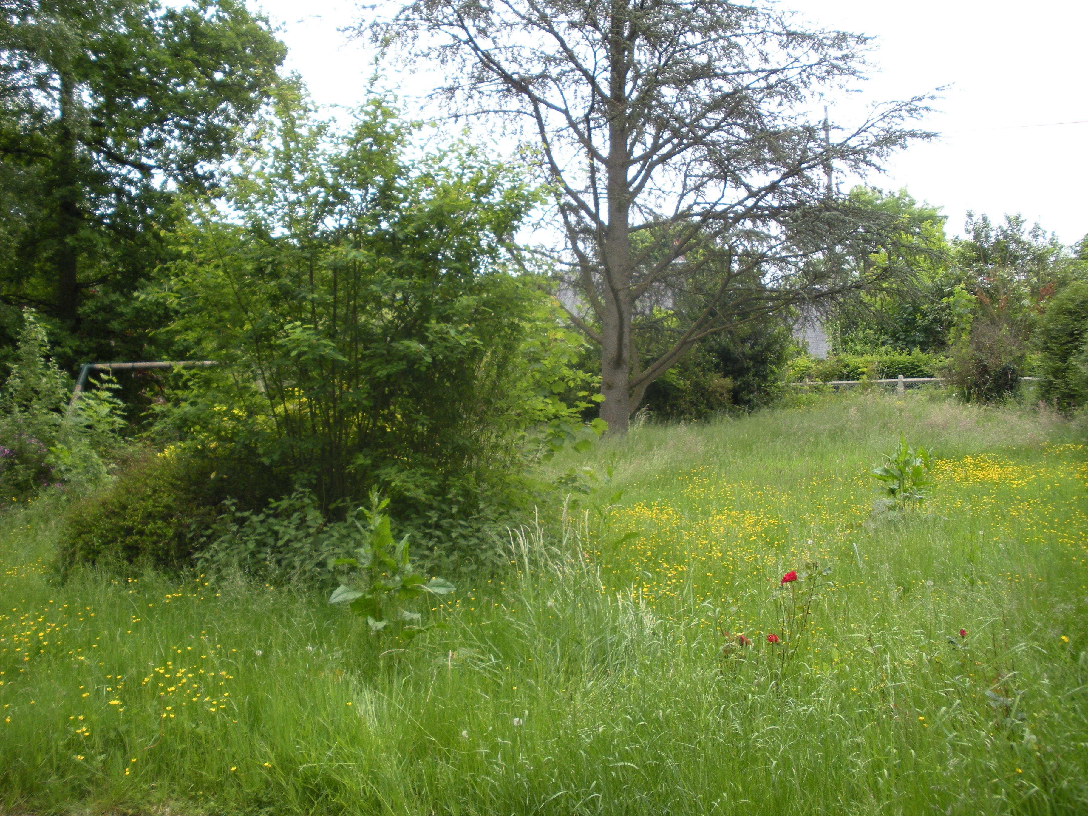 Entretien des espaces verts at bricol eure for Entretien des espaces verts